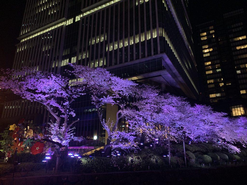 The Prince Gallery Tokyo Kioicho周邊-酒店樓下衣間的櫻花
