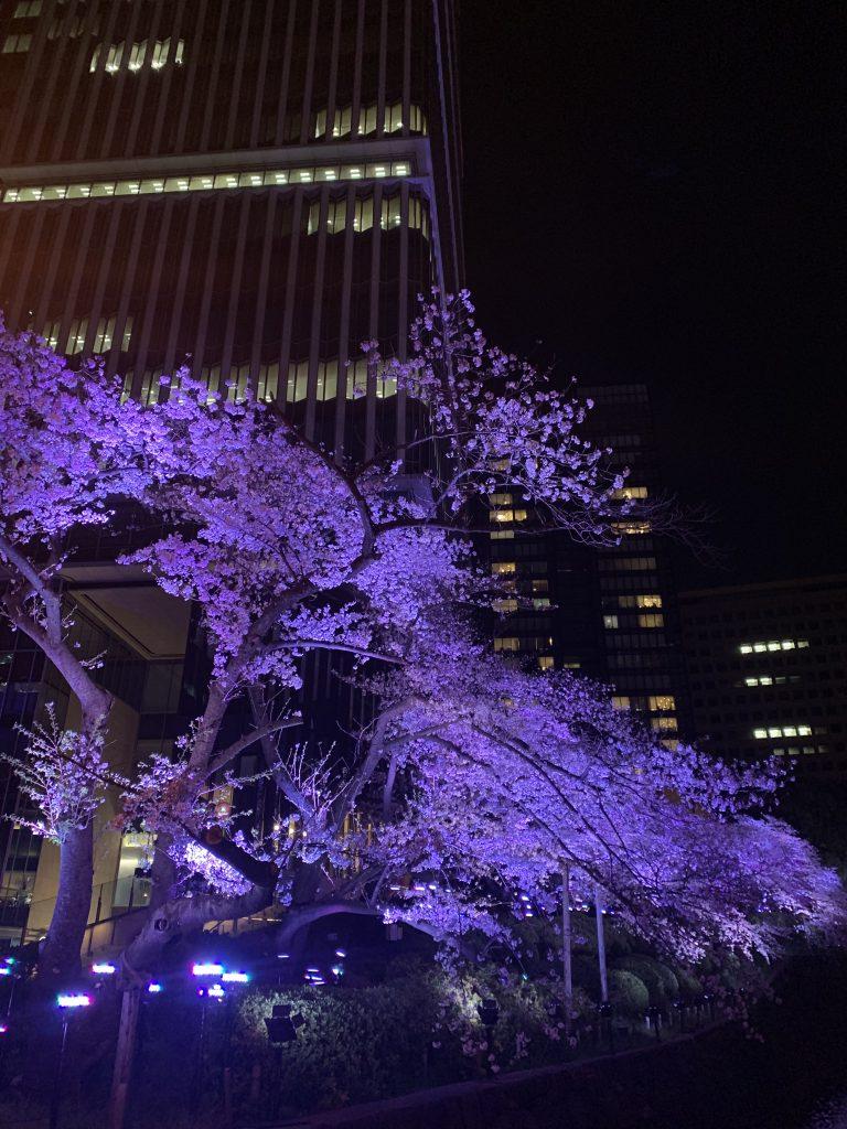 The Prince Gallery Tokyo Kioicho周邊-酒店樓下衣間櫻花景色