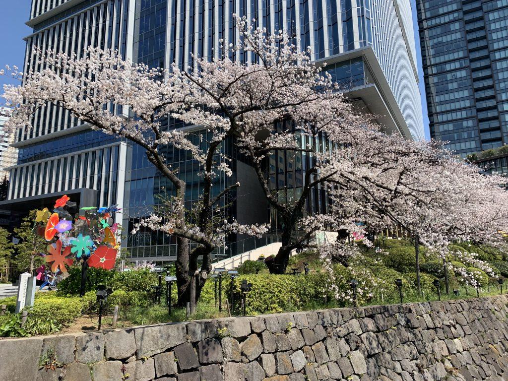 東京紀尾井町王子畫廊豪華精選酒店周邊-酒店樓下櫻花